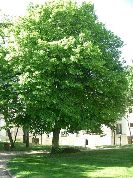 5 arbres planter pour les abeilles reforest 39 action. Black Bedroom Furniture Sets. Home Design Ideas