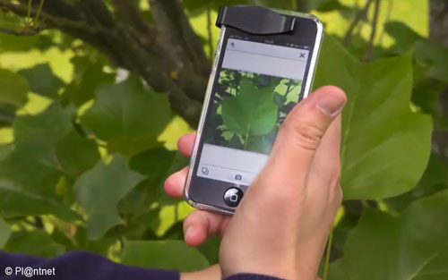 Pl Ntnet L Application Qui Reconnait Les Arbres Reforest Action