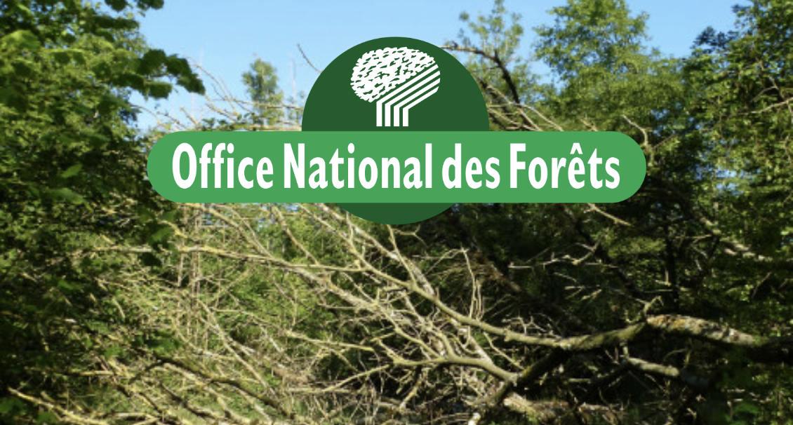Aidez nous sauver les for ts du nord pas de calais reforest 39 action - Office national des forets ...