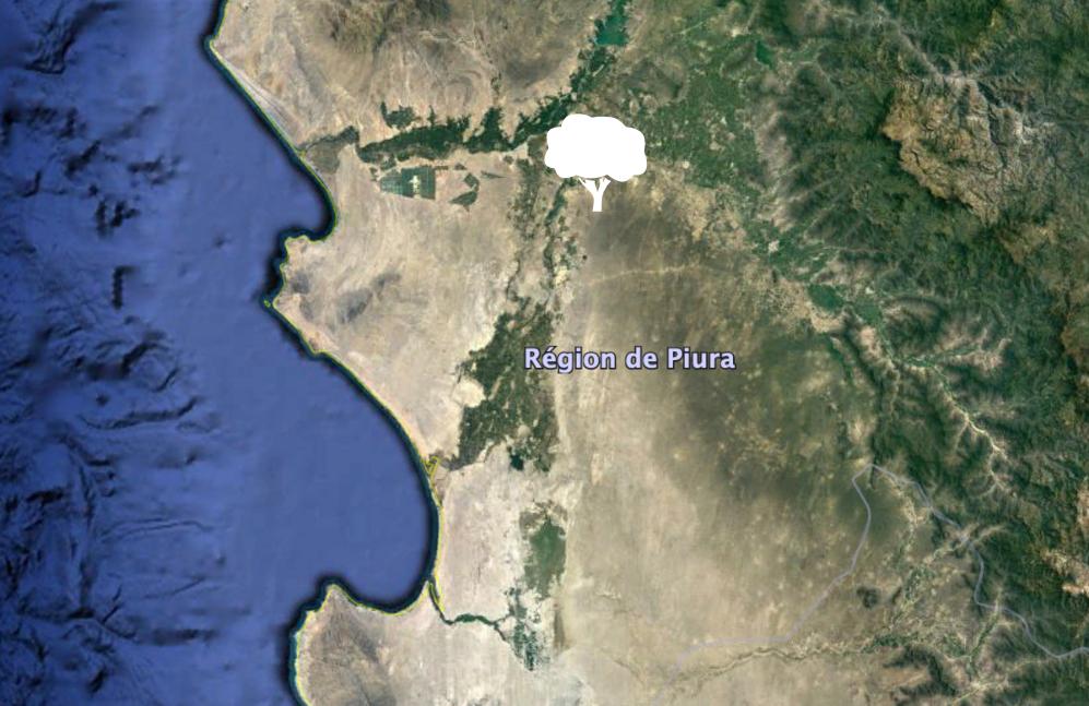 Reforestation In Peru Piura Reforest Action