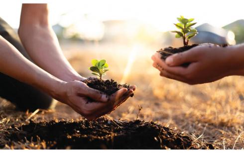 Participer au renouveau de la forêt