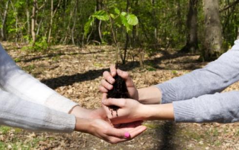 Offrez un arbre !