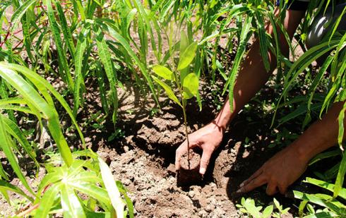 Opalean s'engage avec Reforest'Action