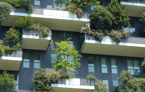 Pourquoi planter des arbres en ville ?