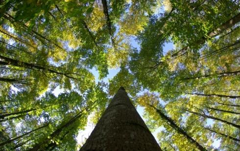 SAMEX  protège les arbres de demain