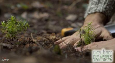 L'Intelligence des arbres, Peter Wohlleben, arbres, plantation