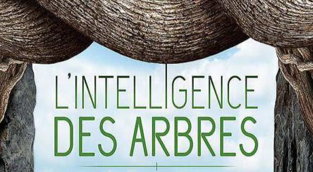L'Intelligence des arbres, forêts, cinéma, documentaire, débat