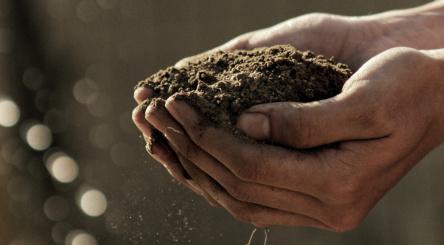 Journée Mondiale des Sols, sols, L'Appel du sol, écologie, nature, environnement, planète
