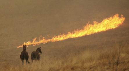 Californie, incendie, feux de forêts, Etats-Unis