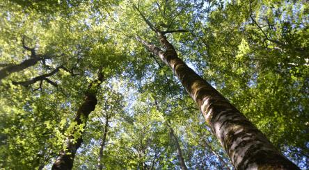 Europe, semaine européenne des forêts, forêts, reforestation, biodiversité, Pologne, Belgique, Portugal, Espagne, Italie